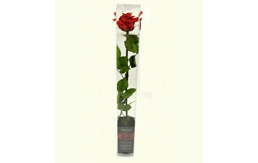 Ruže balená