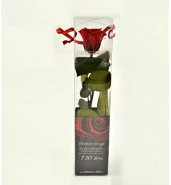 Ruže balená mini